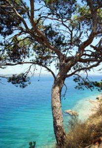 Maginfique paysage de Spetsès - Feuille de choux