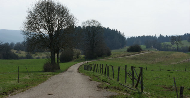 Franche Comté - Feuille de choux